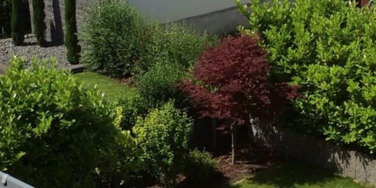 Vegetation im Garten