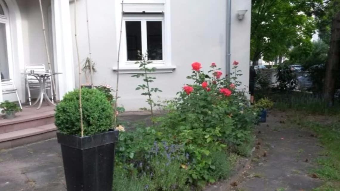 Gartenumgestaltung Terrasse mit Rosenbüschen
