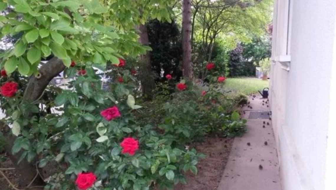 Gartenumgestaltung Nachher Seitenweg mit Bepflanzung