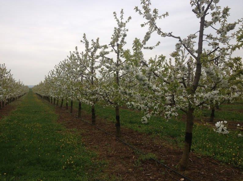 Landwirtschaft viele Bäume auf dem Feld