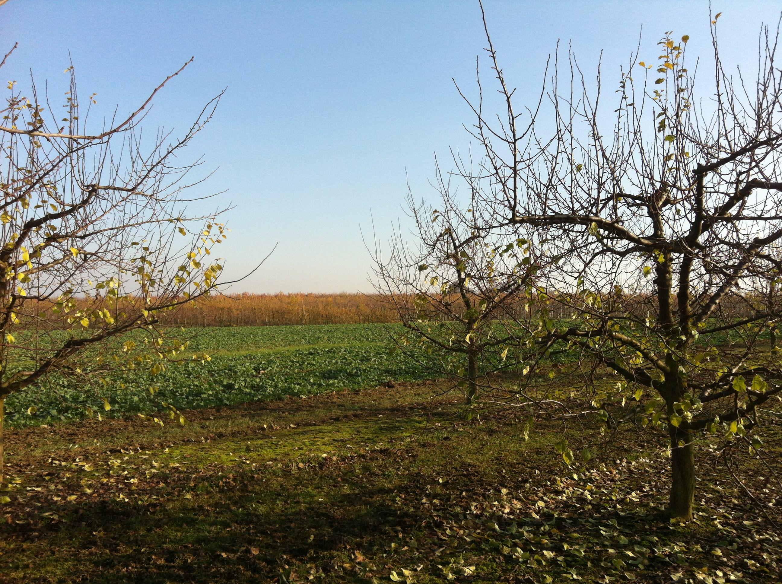 Obstanlage im Herbst Beregnungsanlage Landwirtschaft