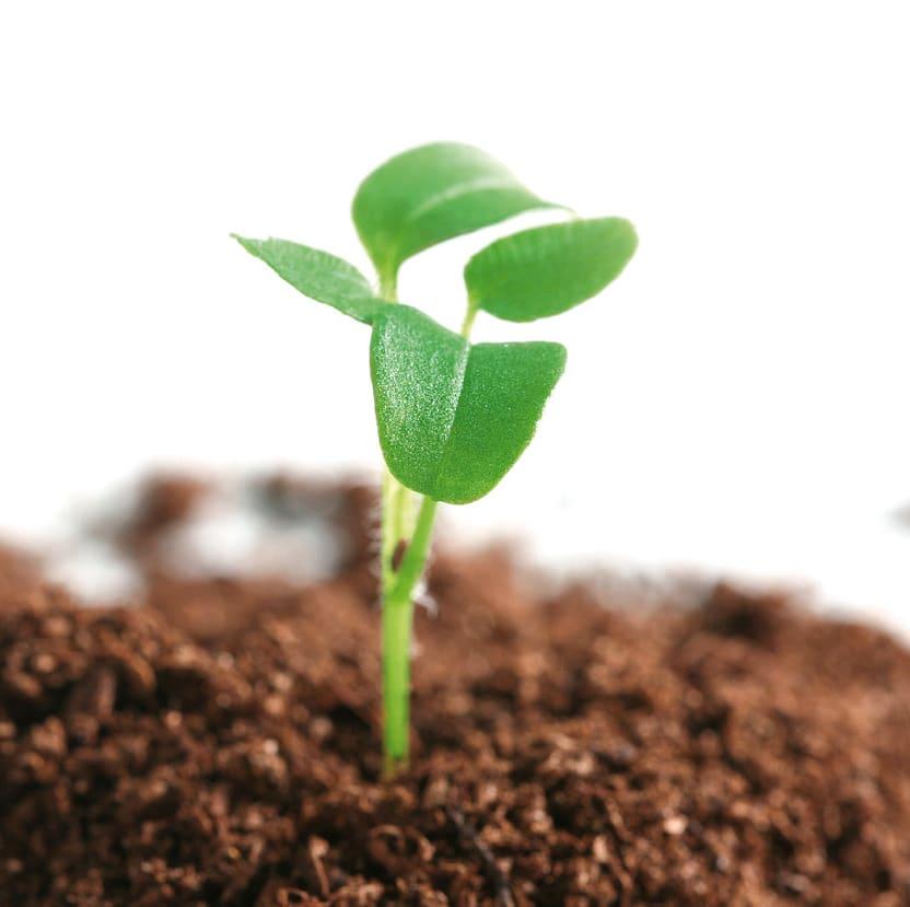 Pflanze in der Erde grün durch Beregnung quadratisch