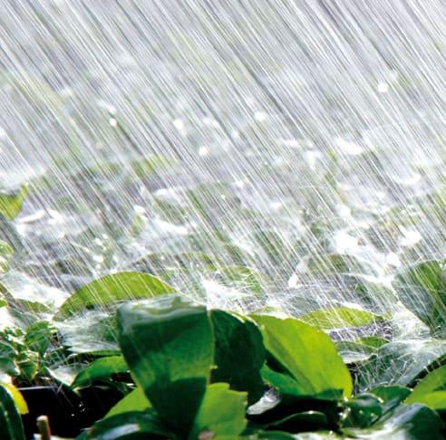 Pflanzen starke Beregnung Bewässerungsanlage
