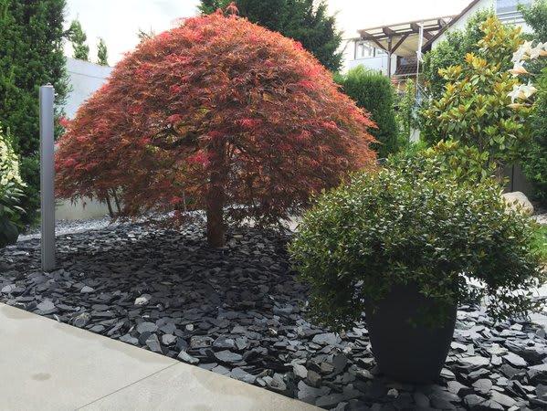 Bepflanzung Garten Steine Büsche
