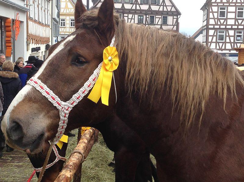 Pferd mit gelber Schleife