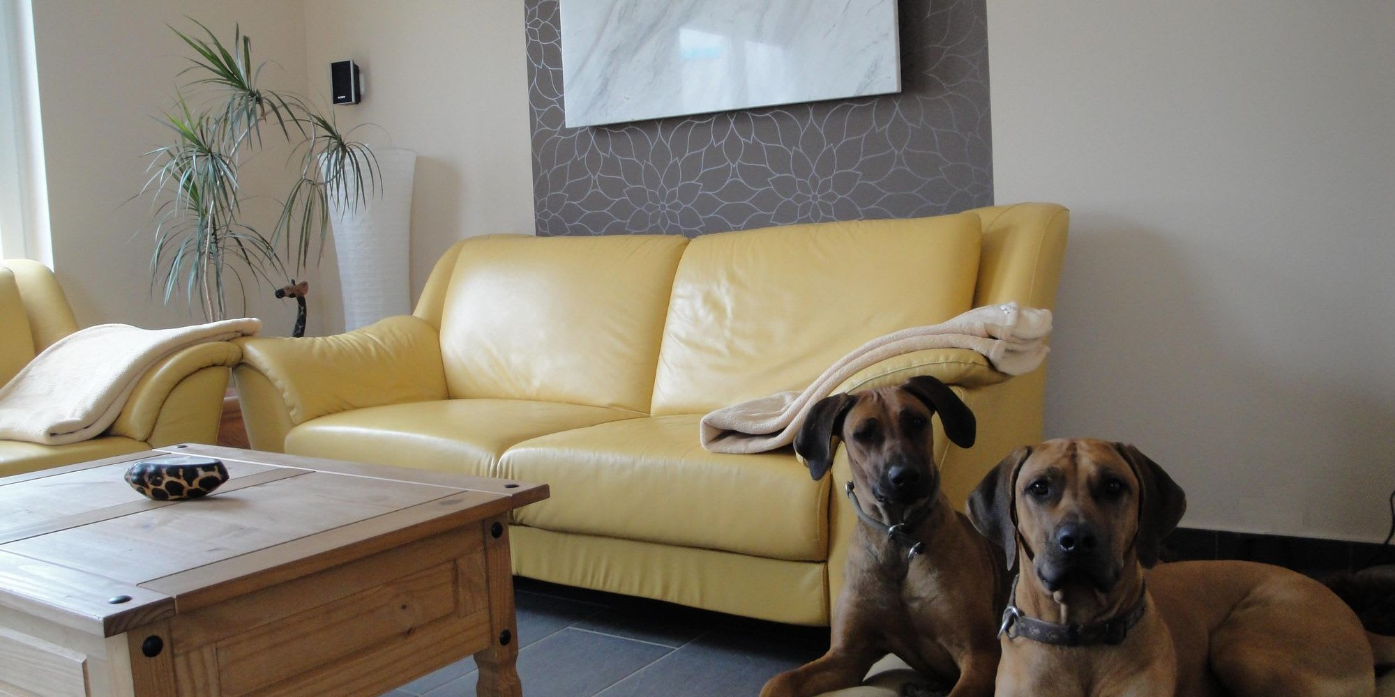 Wohnzimmer gelbes Sofa mit Hunden