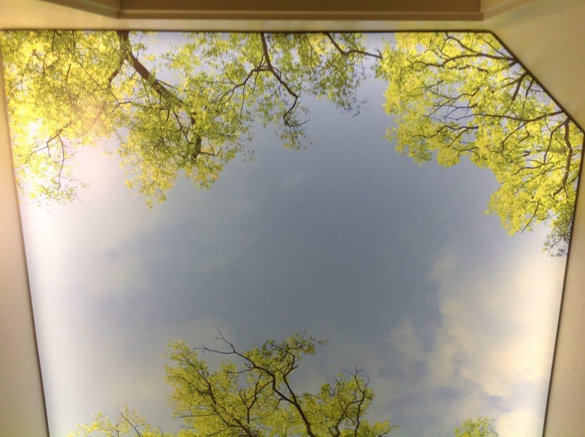 Bedruckte Lichtdecke Himmel mit Bäumen