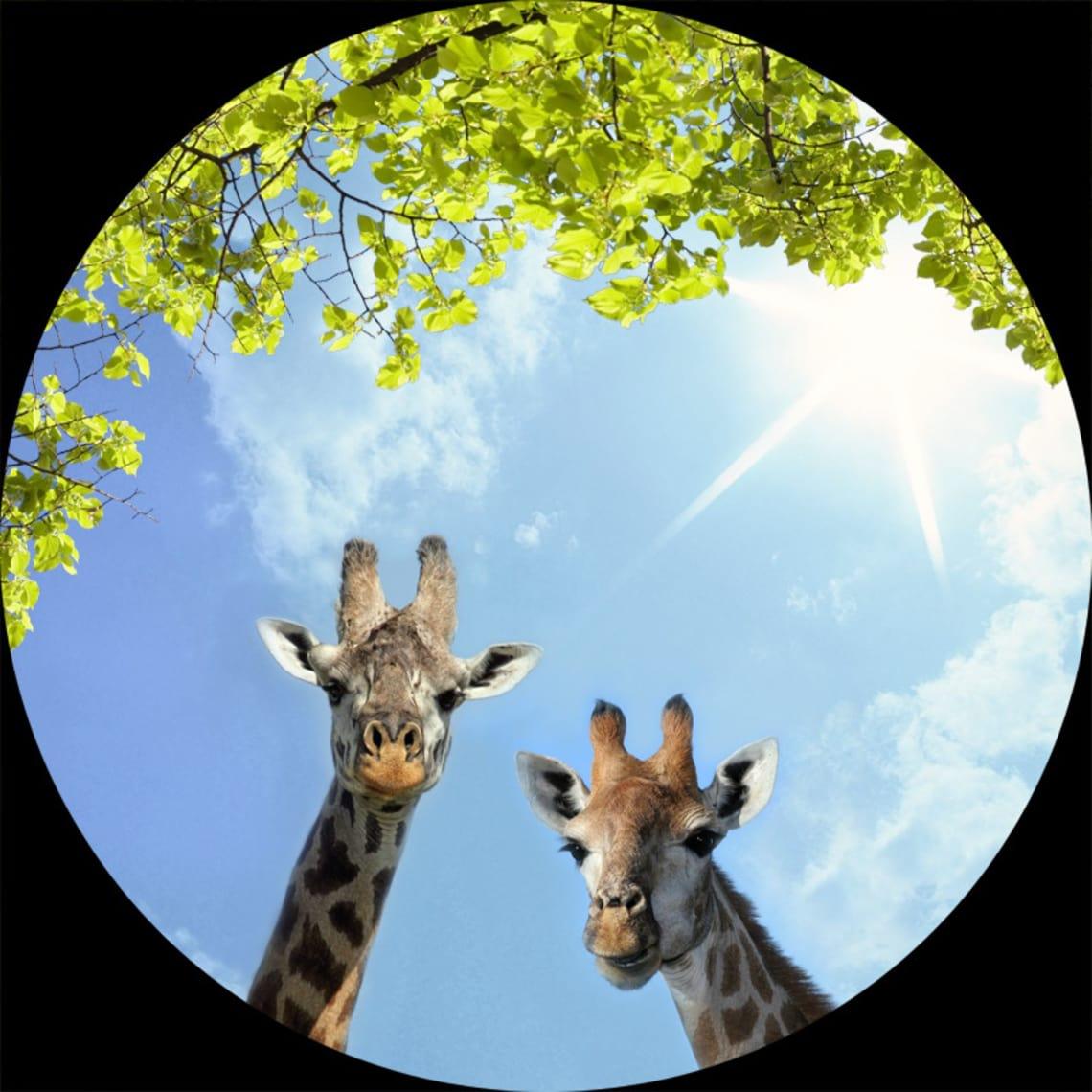 Lichtdecke mit Giraffen