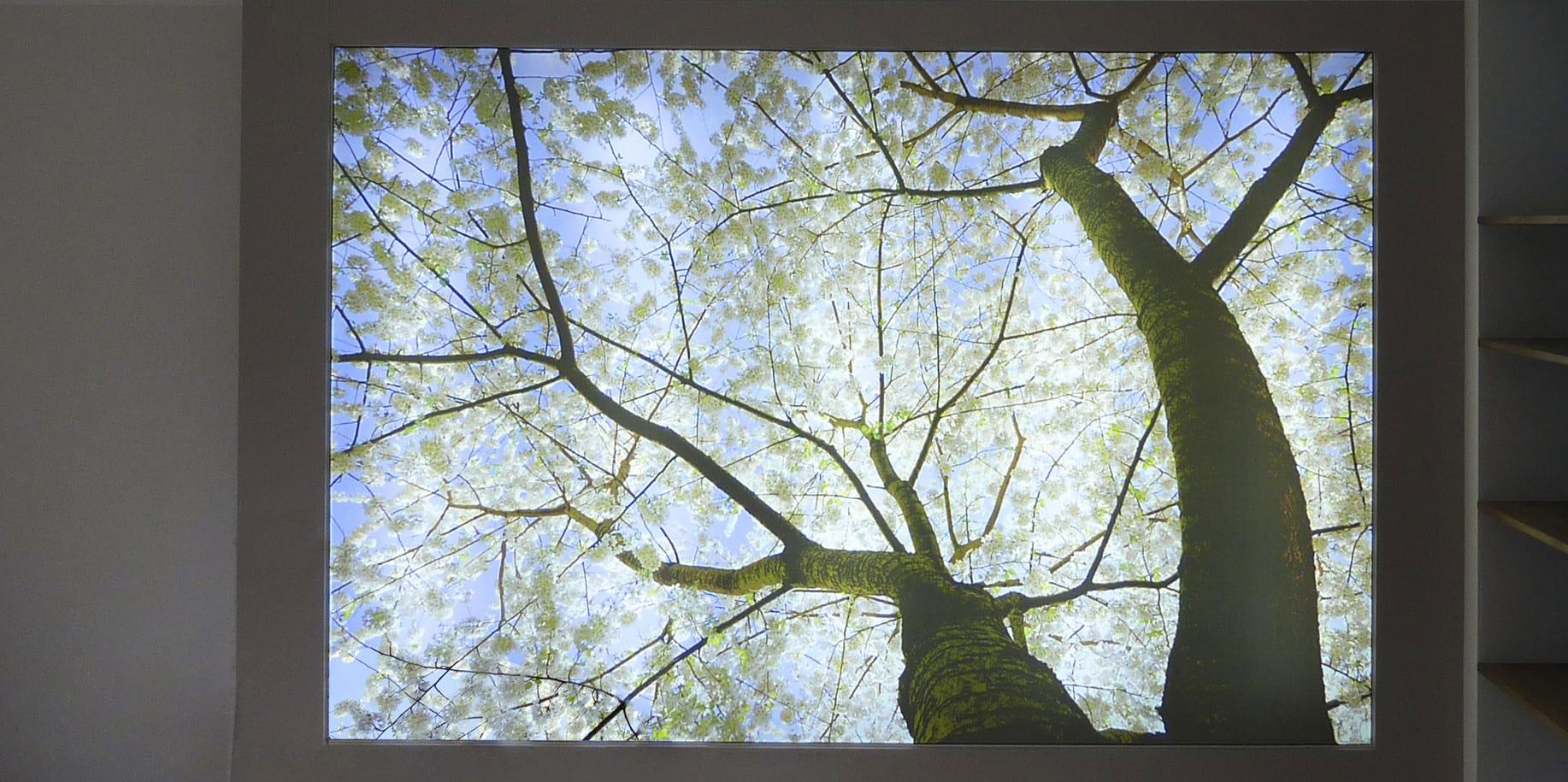 Hinerleuchtete Spanndecke mit Druck Baum und weißen Blüten