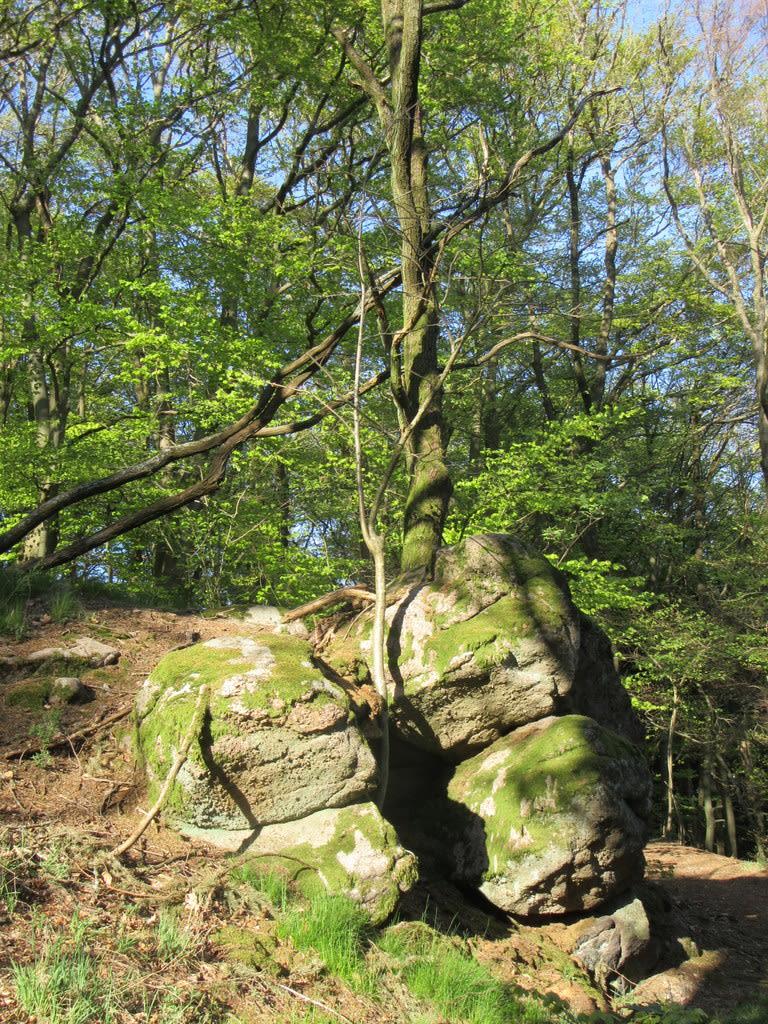 Craniosacral Felsen und Bäume