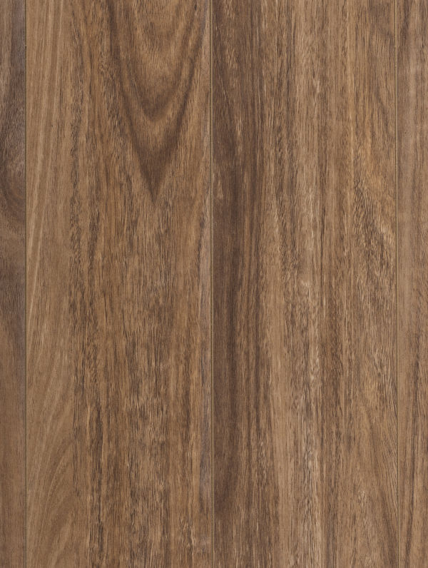 Eyre Spotted Gum