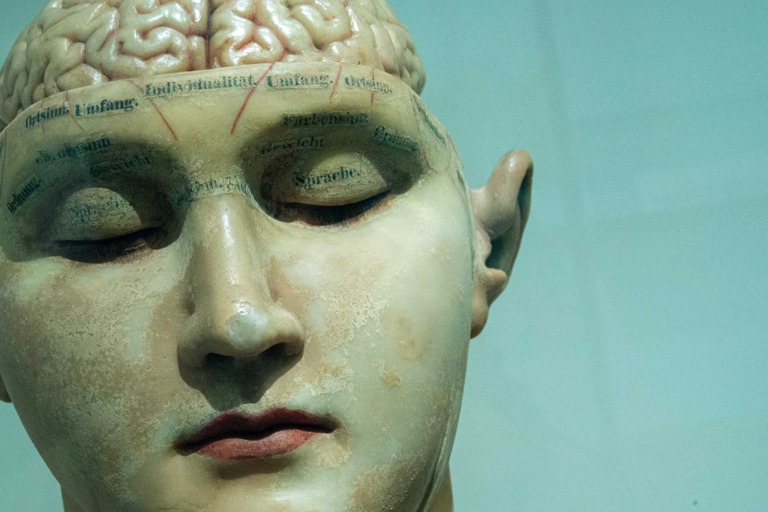 model head with an exposed brain
