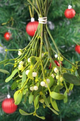 A sprig of mistletoe