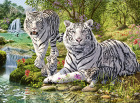 WHITE CATS 500