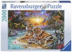 PUSLESPILL TIGER AT SUNSET2000