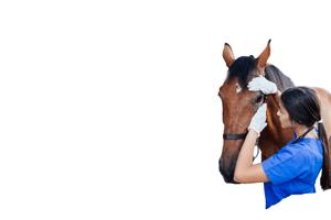 veterinarian calming a horse