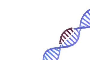 CRISPR gene modifications DNA strand