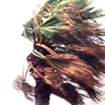 hurricane winds hitting a palm tree