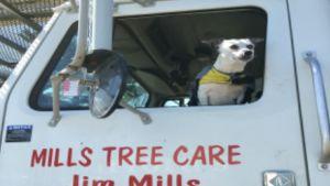 Mills Tree Care