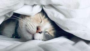 Comprehensive Sleep Services McKinney