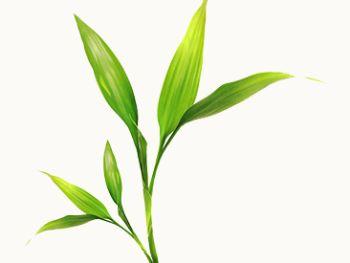 Evergreen Zero Waste Management