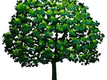 The Tree Masters Tree Service