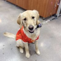 land-of-paws---overland-park-5043