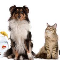 petcare-animal-hospital-56917