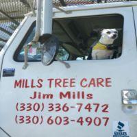 mills-tree-care-34941