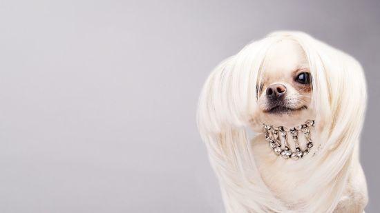 Luxury Dog Collars + Leashes