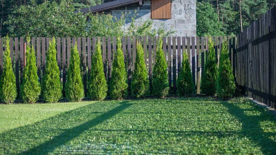 Growing Evergreen Trees in Your Yard