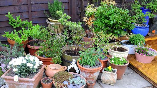 Indoor Plant + Container Gardening Guide