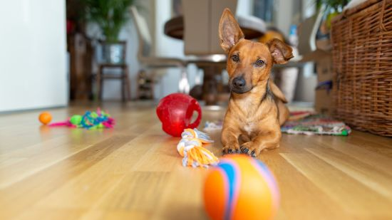 Toys to Keep Your Dog Entertained