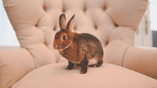 5 Homemade Rabbit Treat Recipes