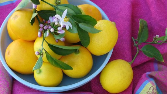 Learn About All Things Meyer Lemons
