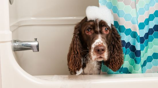 How to Bathe + Groom Your Dog