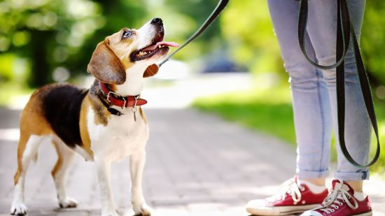 Choosing the Right Leash for Your Dog