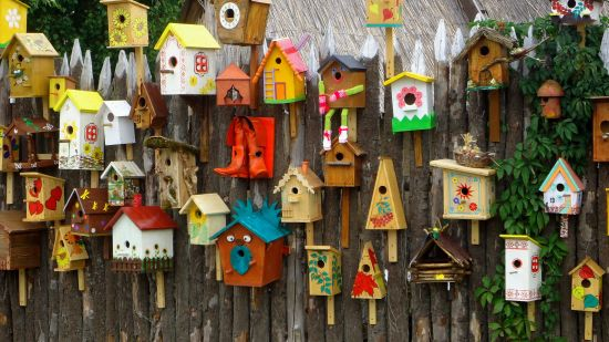 5 Cool Bird Feeders to Add to Your Yard