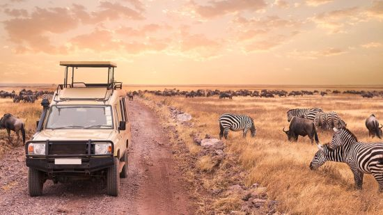 Go on a Virtual African Safari