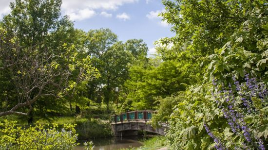 Explore the Beauty of Powell Gardens