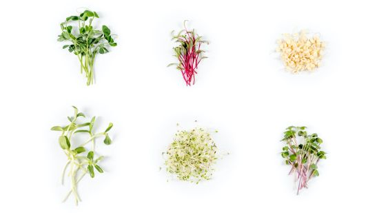 The Superpowers of Microgreens
