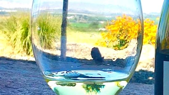 Idaho Wine Tasting