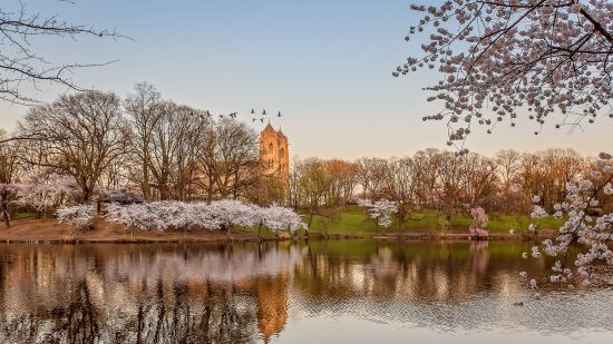 NJ Cherry Blossoms