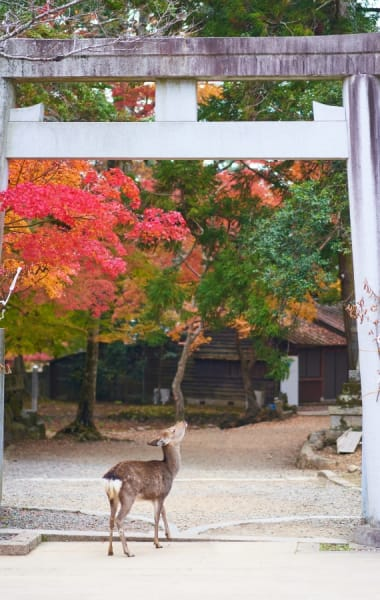 What To Do In Sapporo This Fall - Things To Do In September, October and November 2019