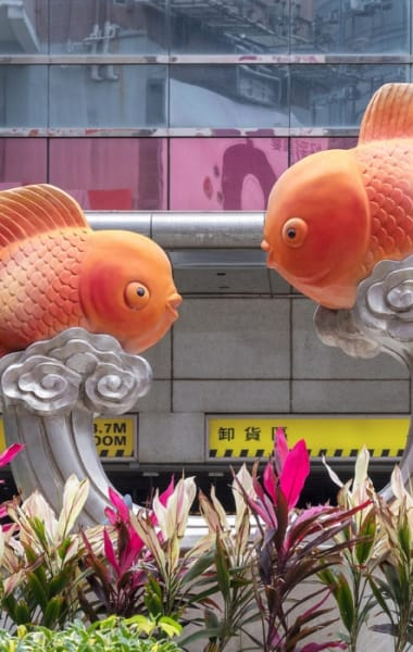 Unusual Things To Do In Hong Kong That Are Not In Your Guidebook