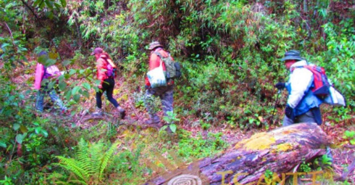 Caminatas ecol gicas para reencontrarse con la naturaleza for Noticias naturaleza