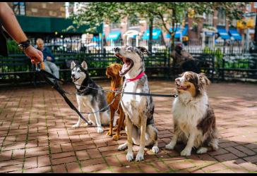 Ofertas de Tienda para Mascotas 2