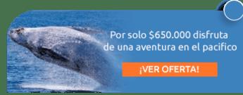 Por solo $650.000 disfruta de una aventura en el pacifico - Tritones Tours