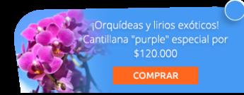 """¡Orquídeas y lirios exóticos! Cantillana """"purple"""" especial por $120.000 - Flores de Colombia Floristería"""