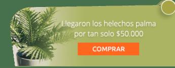 Llegaron los helechos palma por tan solo $50.000 - Marga Plantas